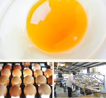 徹底した衛生・品質管理、新鮮で安全な卵をお届けします。